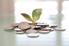 Money Plant Image