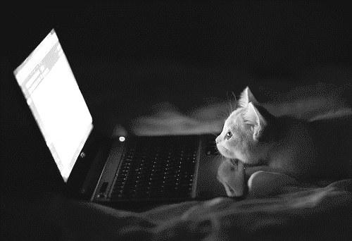 CatComputer.busyonewaystreet